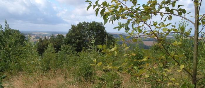 Variety of tress in Primrosehill woodlands
