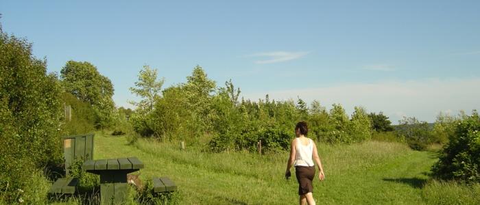 Walking in Primrosehill woodlands