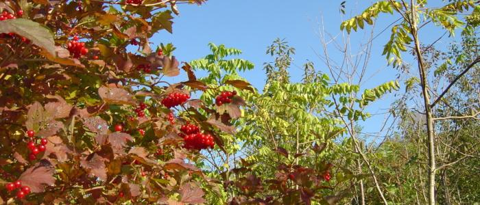 Beatutiful nature in Primrosehill Woodland