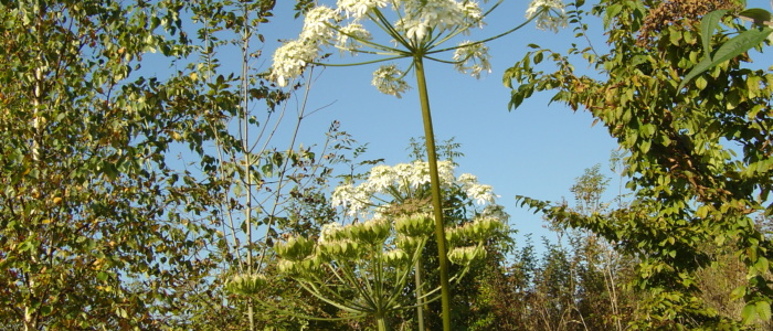 Woodland for all seasons Primrosehill Woodland