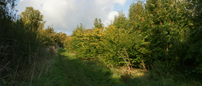 Clearing in Primrosehill woodland