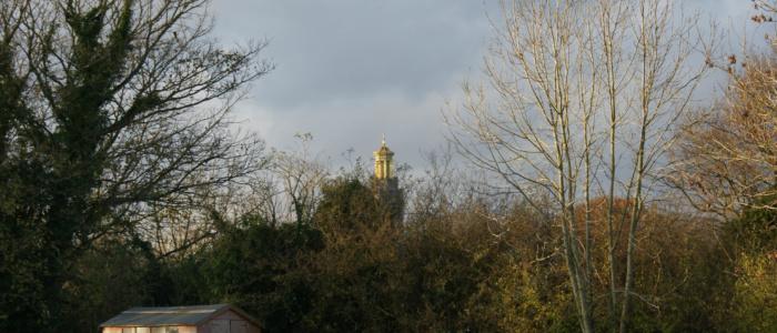 Views from primrosehill woodland