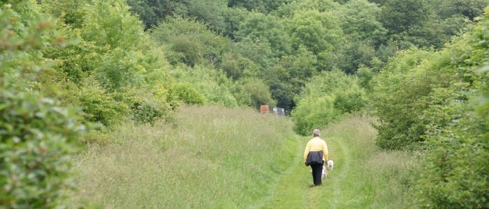 Walking on gentle paths in Primrosehill Woodland