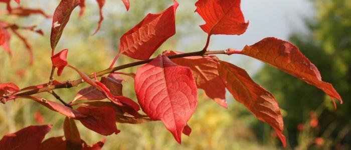 Seasonal chamges in Primrosehill Woodland