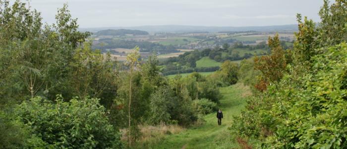 Exploring Primrosehill Woodland
