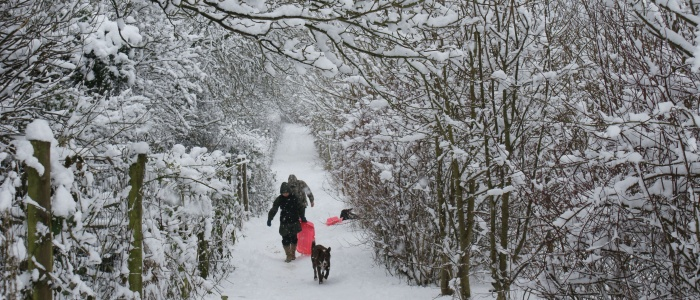 Snow in the Woods - time for sledging