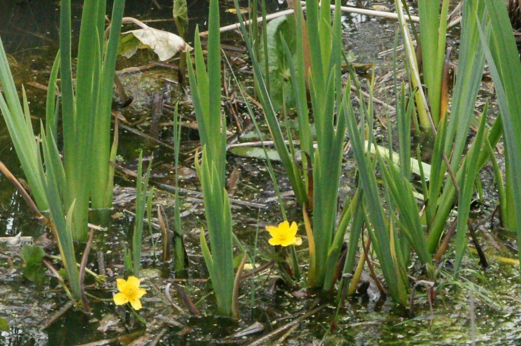Pond in Woodland